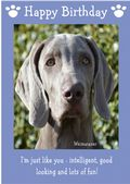 "Weimaraner-Happy Birthday - ""I'm Just Like You"" Theme"